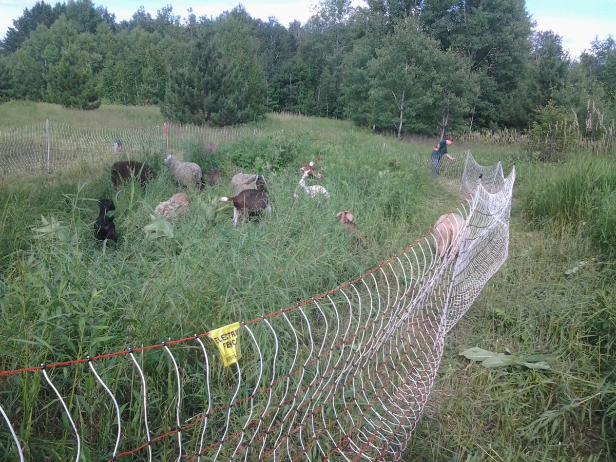 using-an-electric-net-fence-to-contain-livestock
