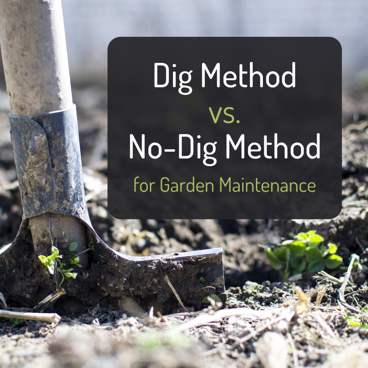 Explore the pros and cons of digging out your garden every year versus using the no-dig method.