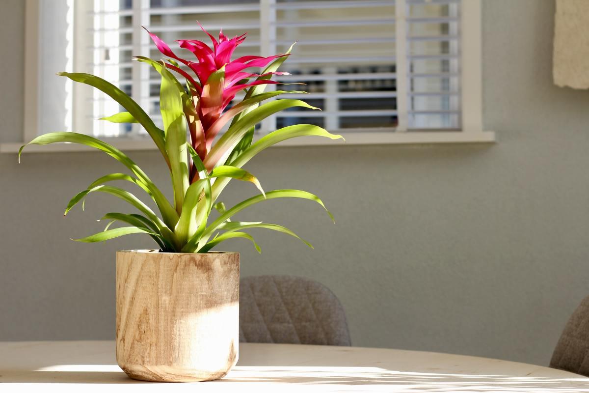 Flower Pot gift for dad