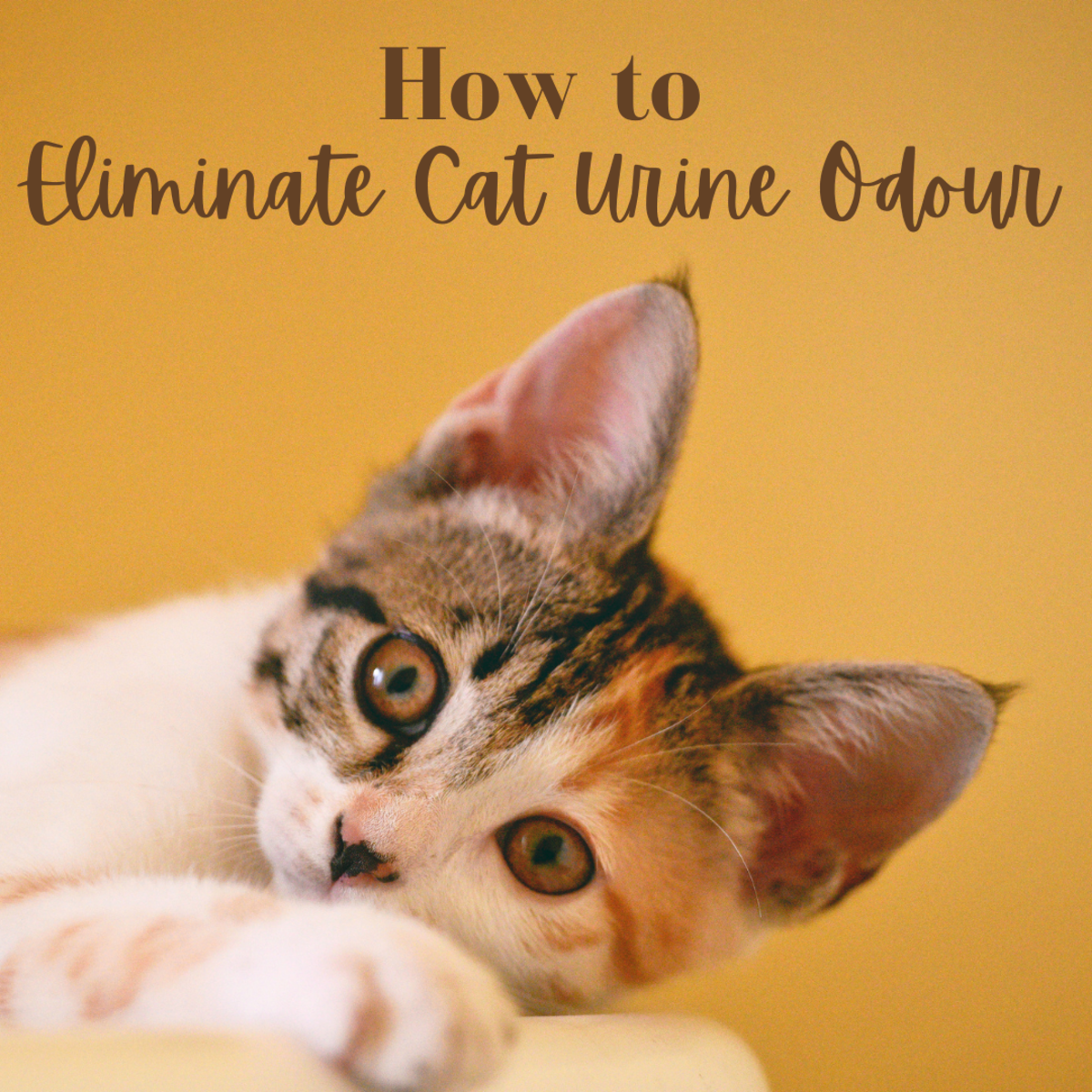 The smell of cat urine is very unpleasant; here's how you can eliminate it.