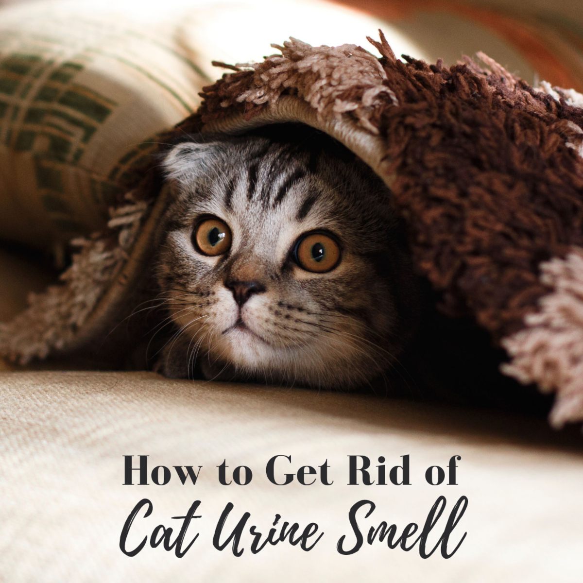 Cat urine has a strong, distinctive, and undesirable odor. Here's how to get this unpleasant smell out of hardwood floors, furniture, and other things around the house.