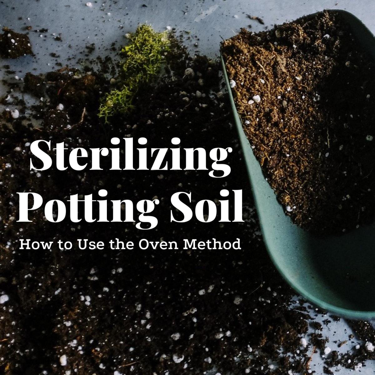 Learn how to ensure your potting soil is pest-free by baking it in your oven.