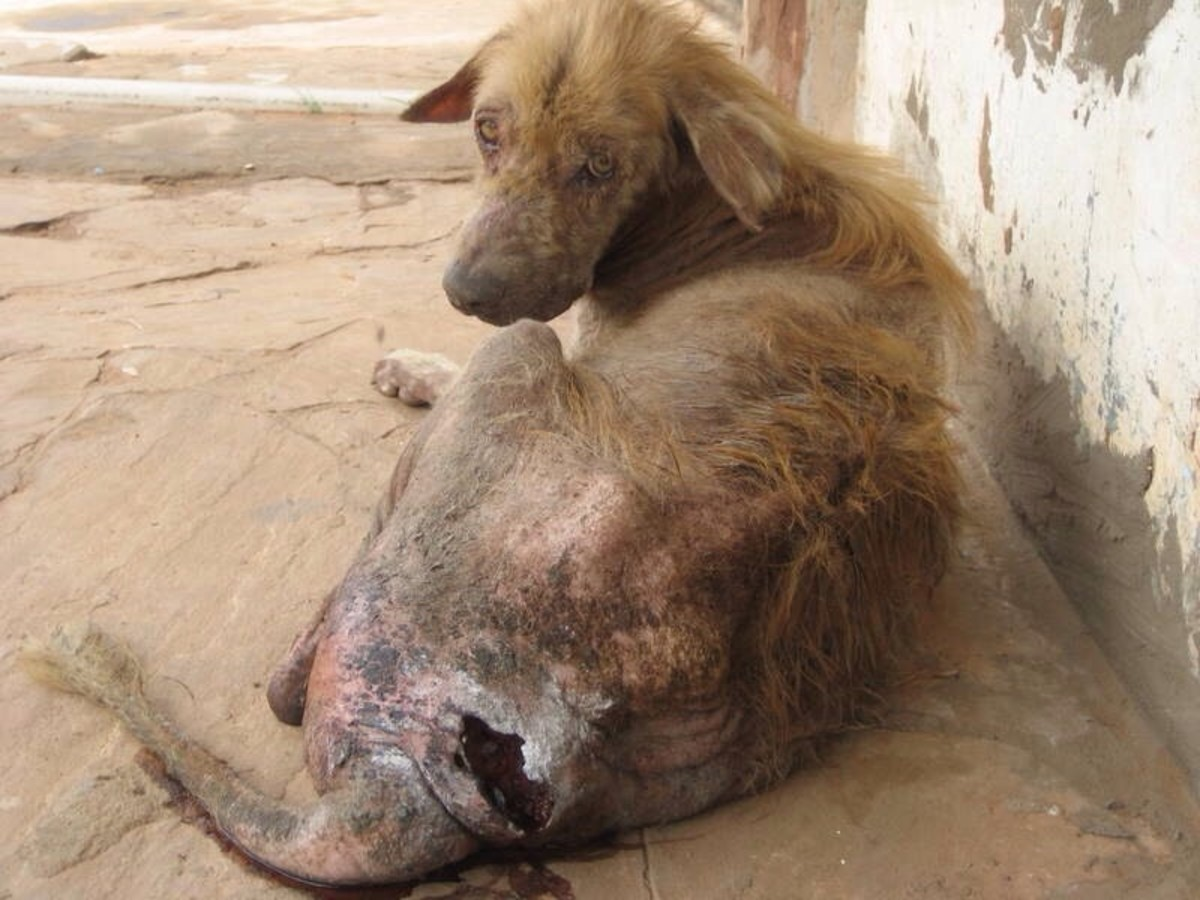 An injured dog needing rescue.