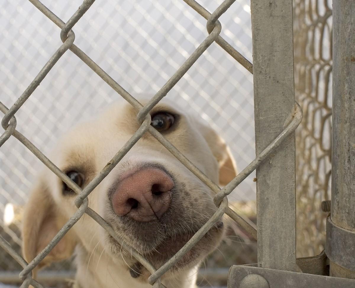 Managing Pet Rescue