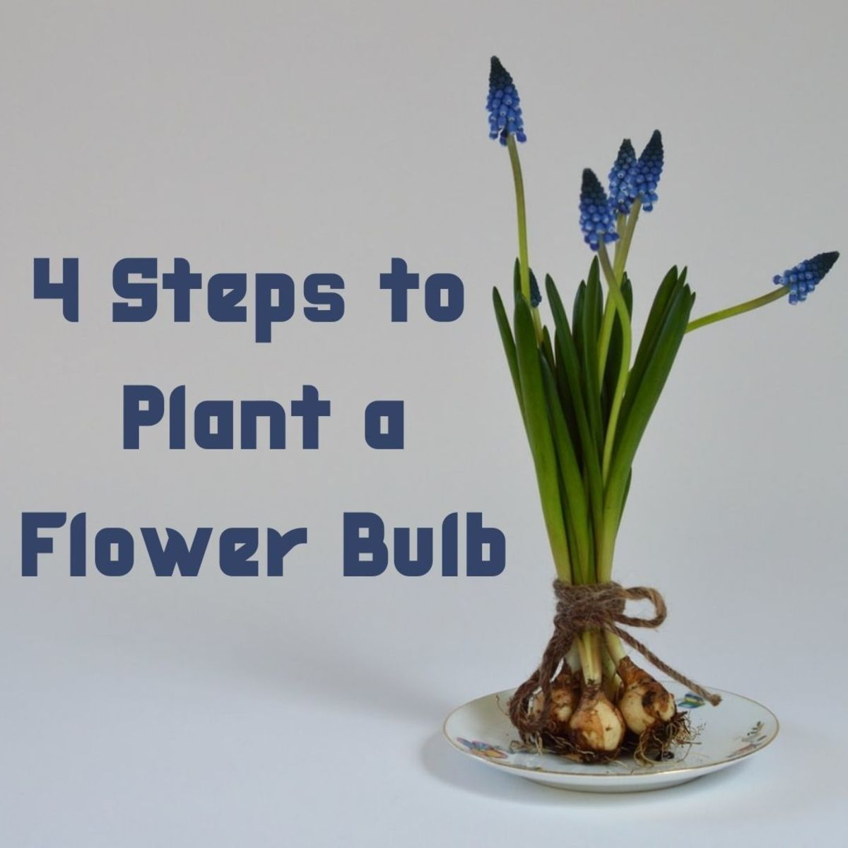 Bulbs produce flowers in the spring.