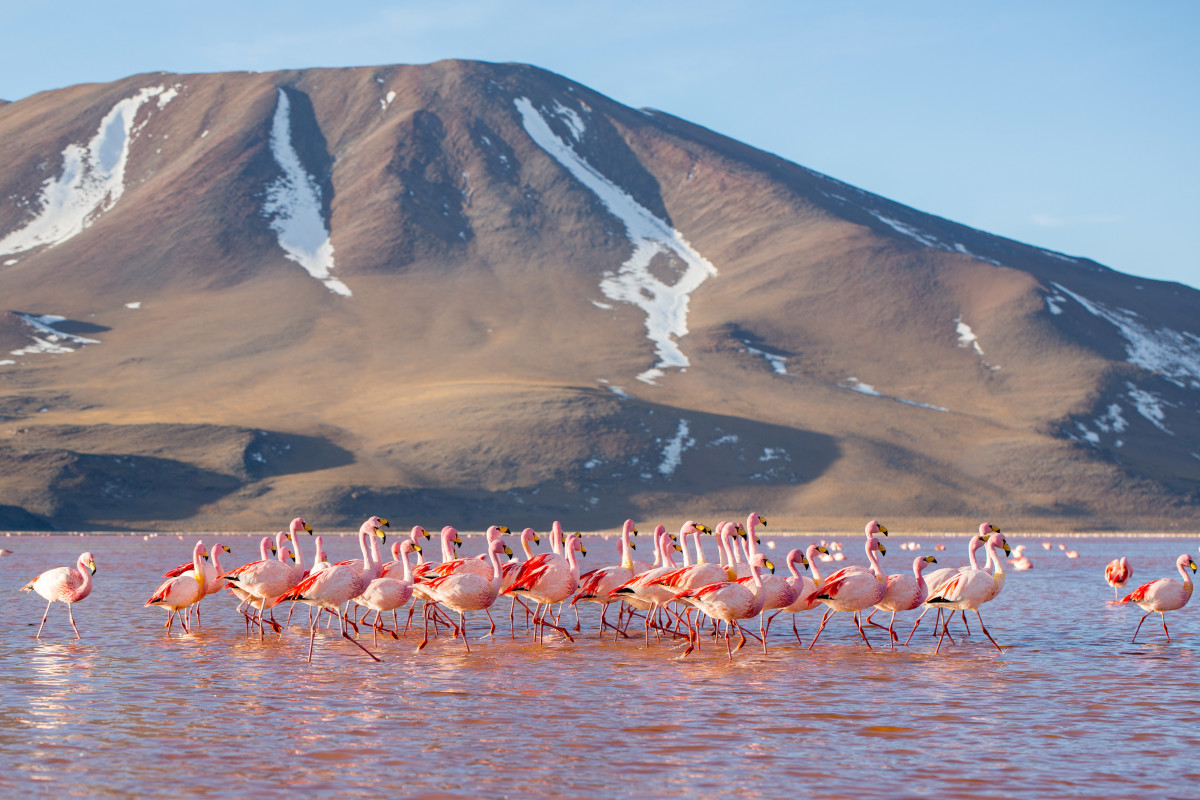 Bolivia's Laguna Colorada is one of the most unique pink lakes in the world.