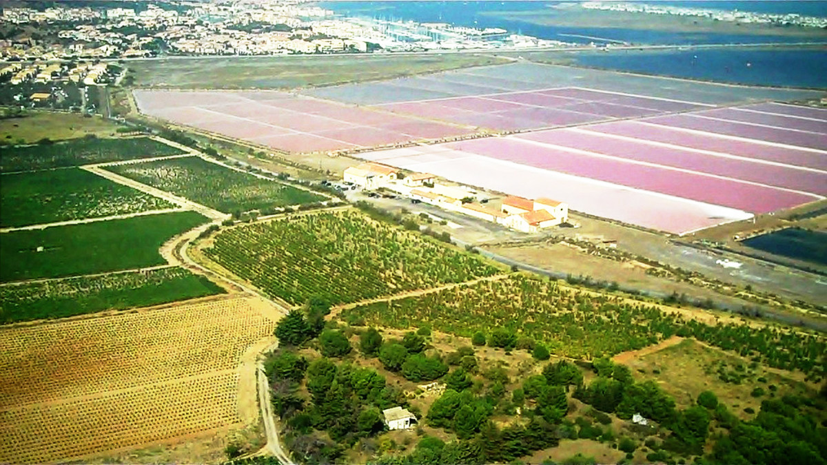 The famous fleur de sel is harvested from a pink lake in France.