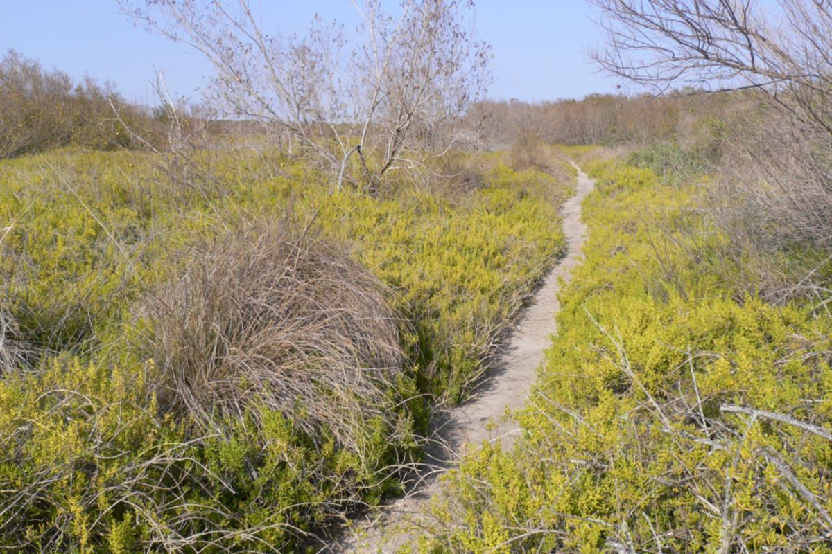 Bayler Daniels Miccosukee Flats (The Hunting trip)