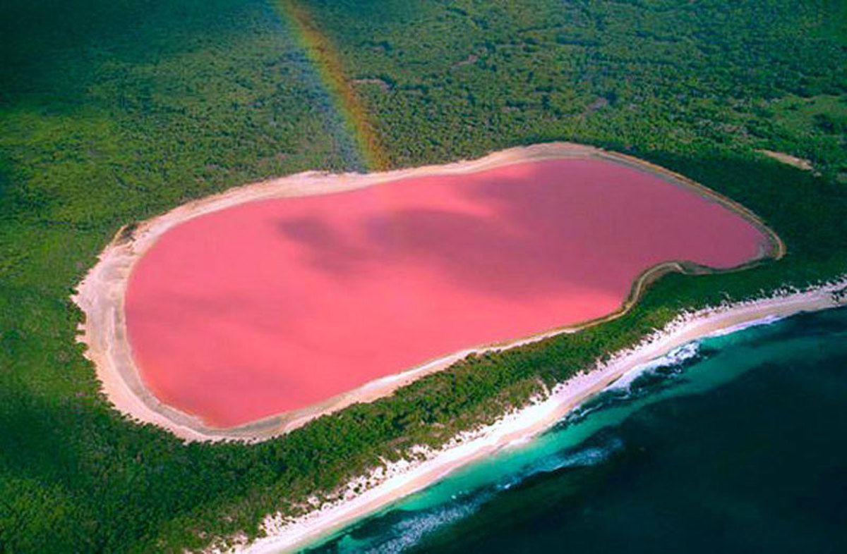 Lake Hillier is the most famous pink lake in the world. The water remains pink when a small sample is taken from the lake.