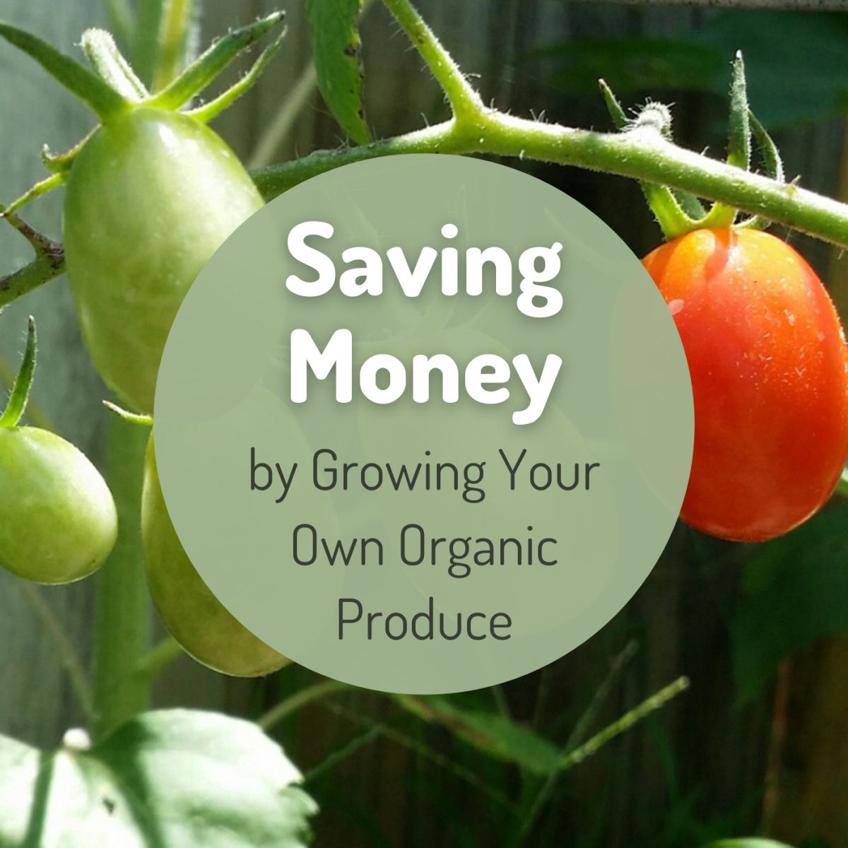 Learn about the cost of starting a small organic vegetable garden in your yard.