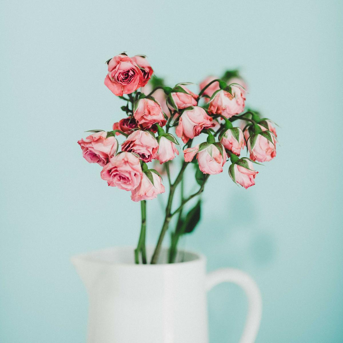 Which flowers last the longest when cut and kept in a vase?