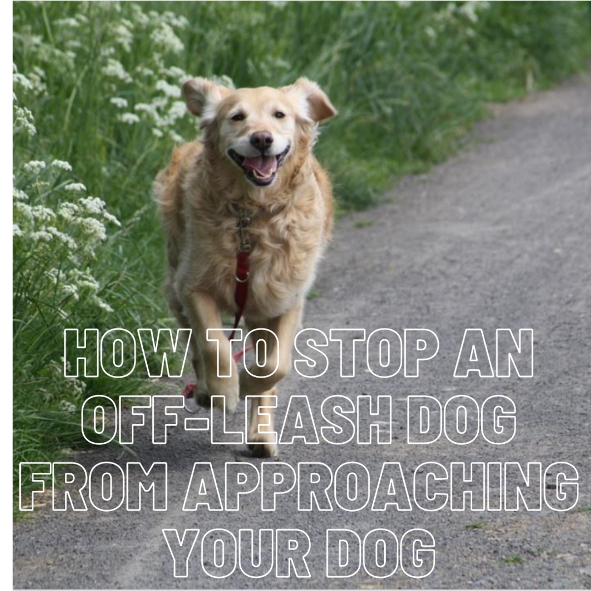 How to Stop an Off-Leash Dog From Approaching Your Dog