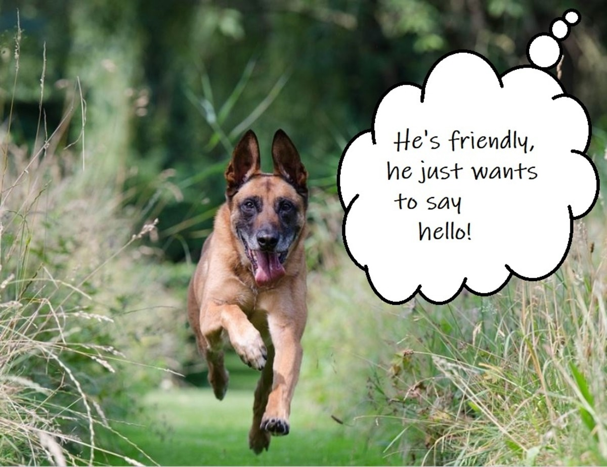 You'll hear this a lot from other dog owners.