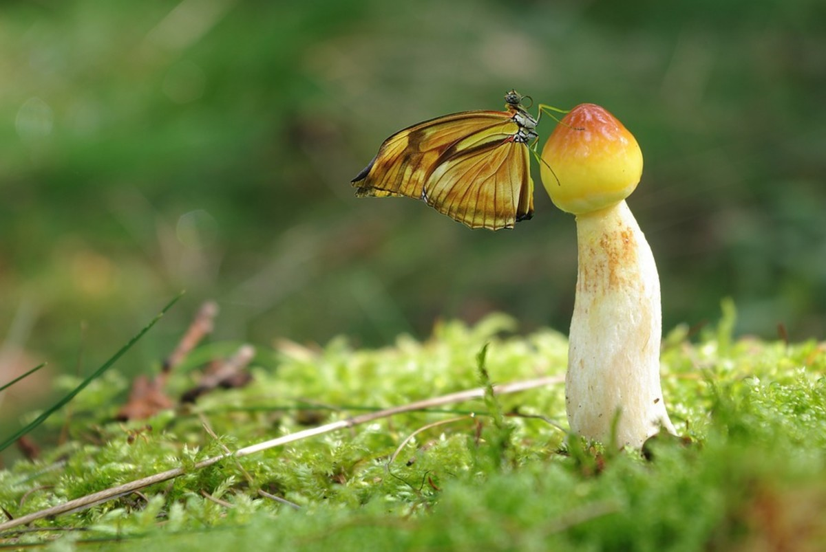 this-is-why-some-mushrooms-are-hallucinogenic