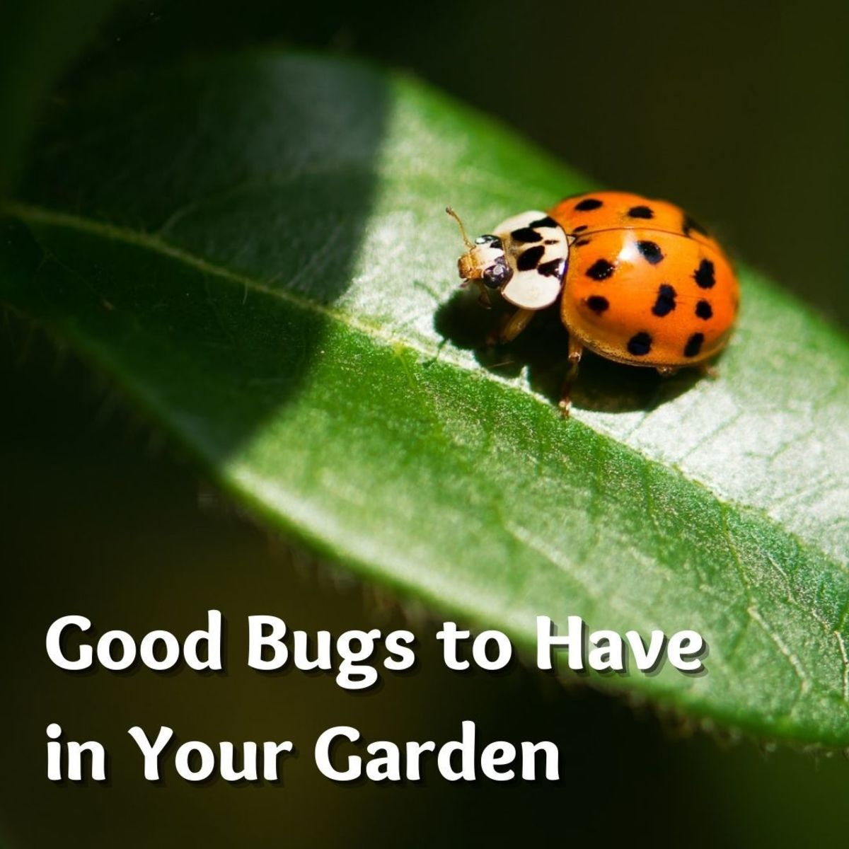 A healthy garden is a mini-ecosystem where beneficial insects, birds, bats, toads and other animals provide natural biological controls against many common pests.