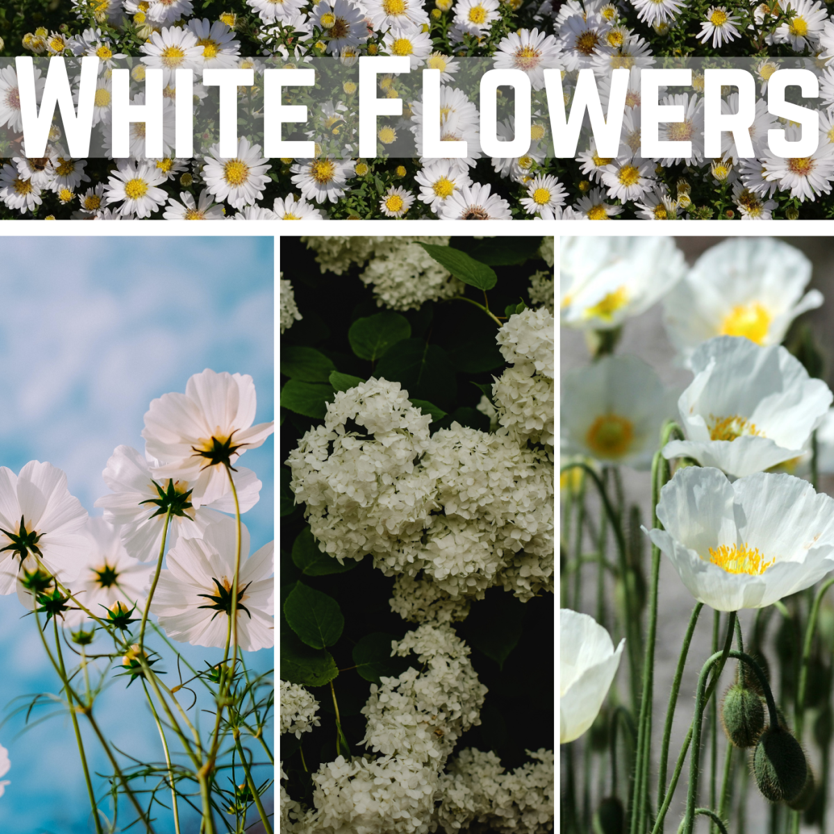 White flowers can really brighten up a garden.