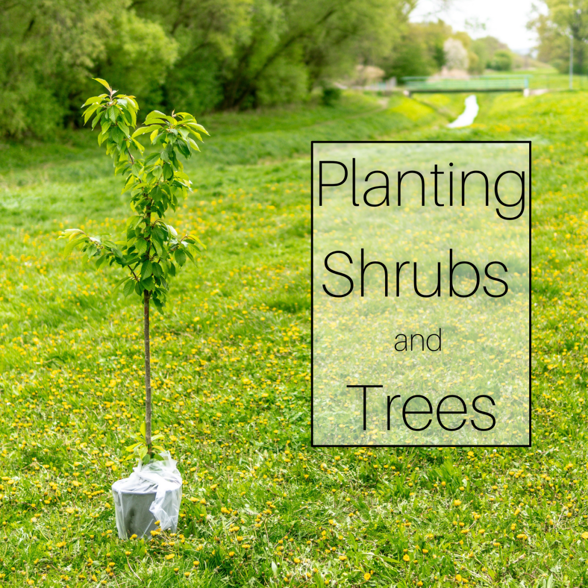 Planting shrubs and trees.