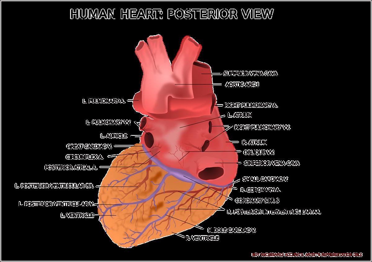 amazing-heart-transplant
