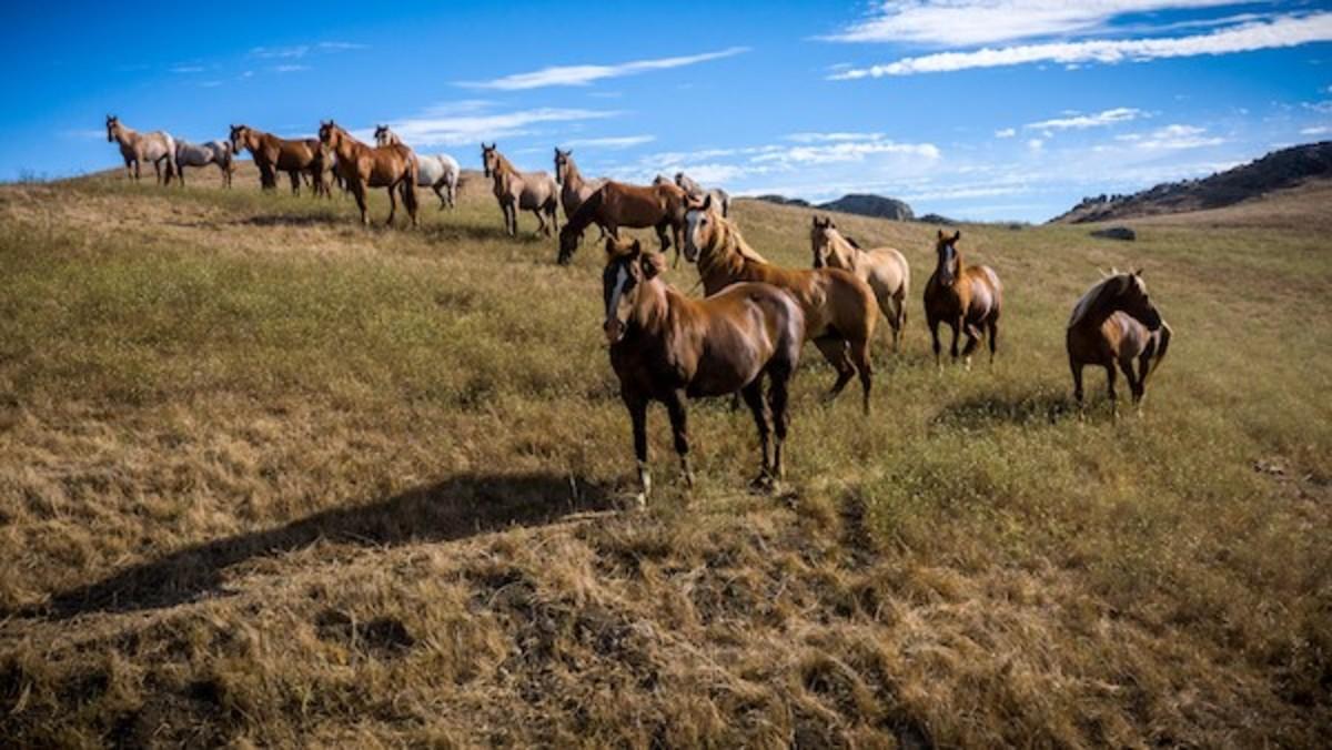 Random horses.