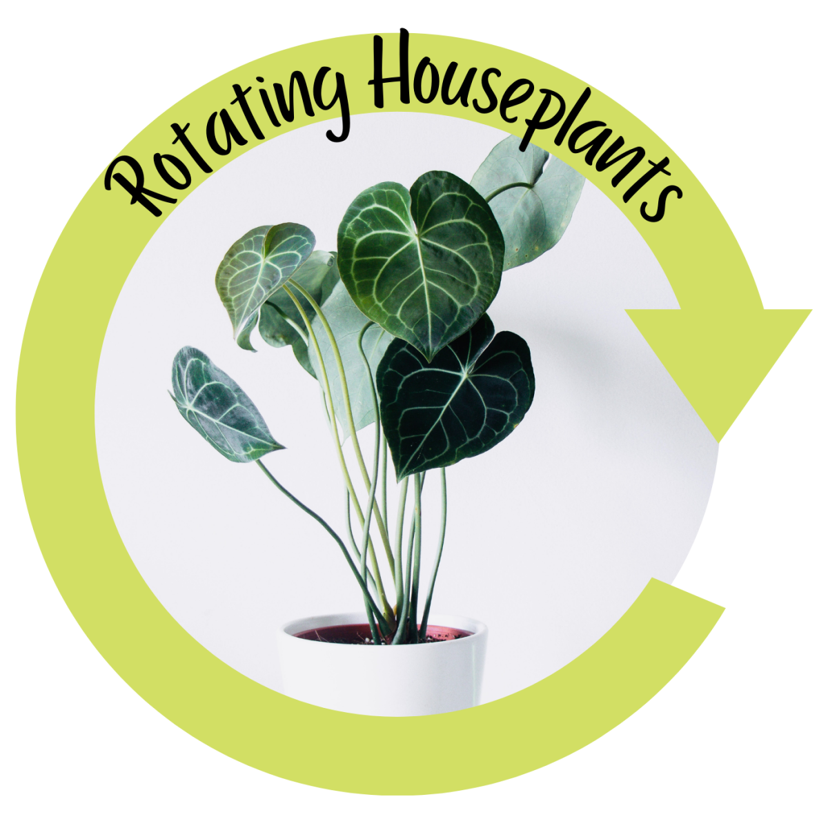 Rotating houseplants.