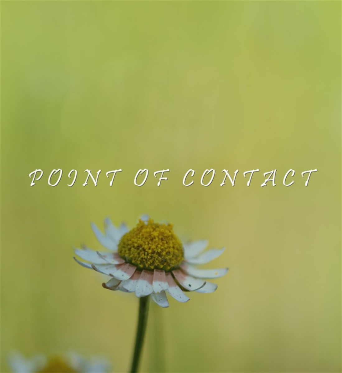 what-is-a-point-of-contact