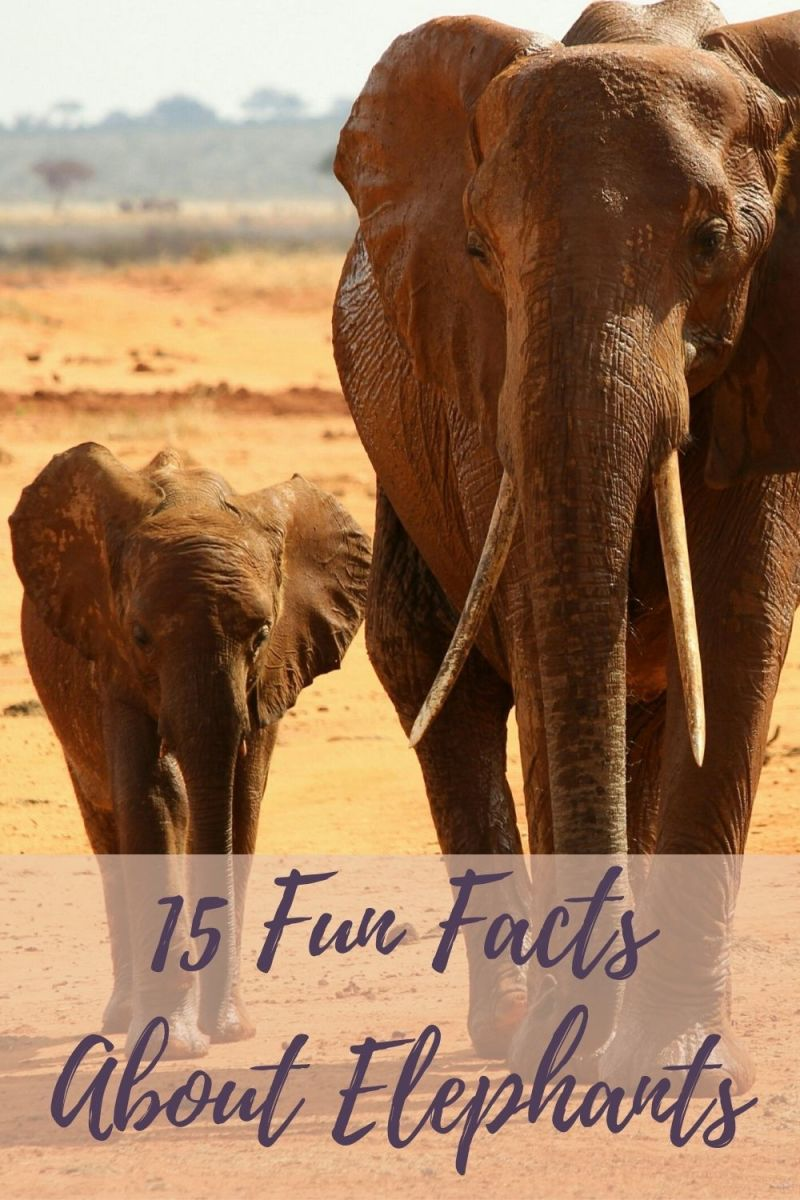 Amazing and fun facts about elephants for kids