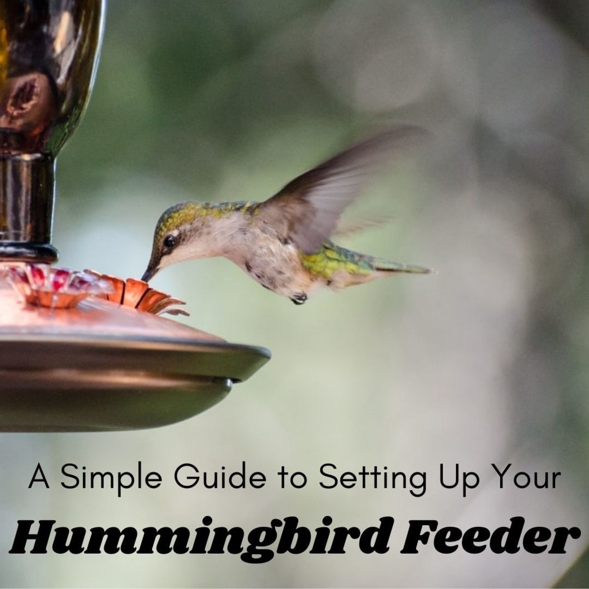 Setting up a hummingbird feeder is a simple process and will keep hummingbirds coming back every season.