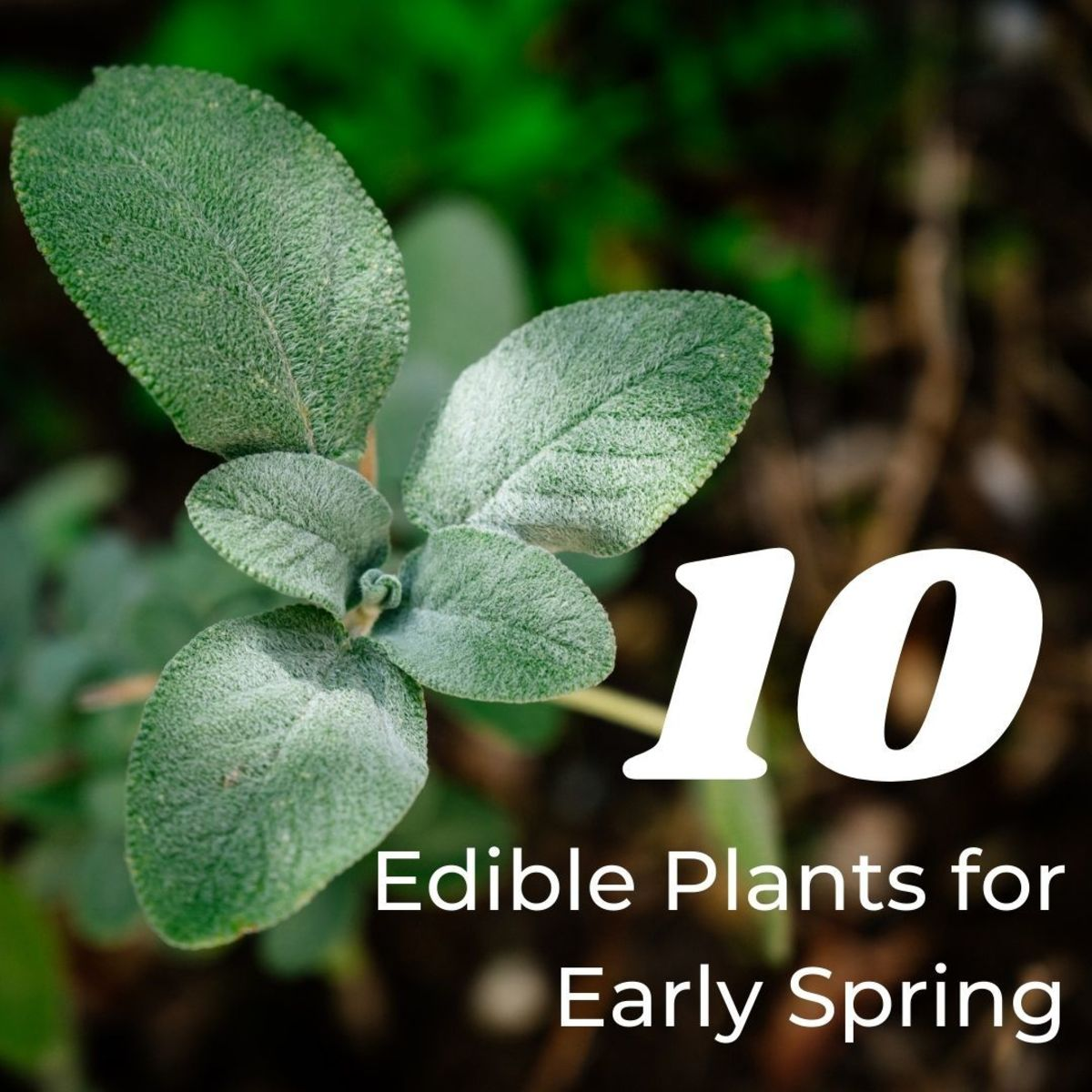 10 Edible Plants for Early Spring