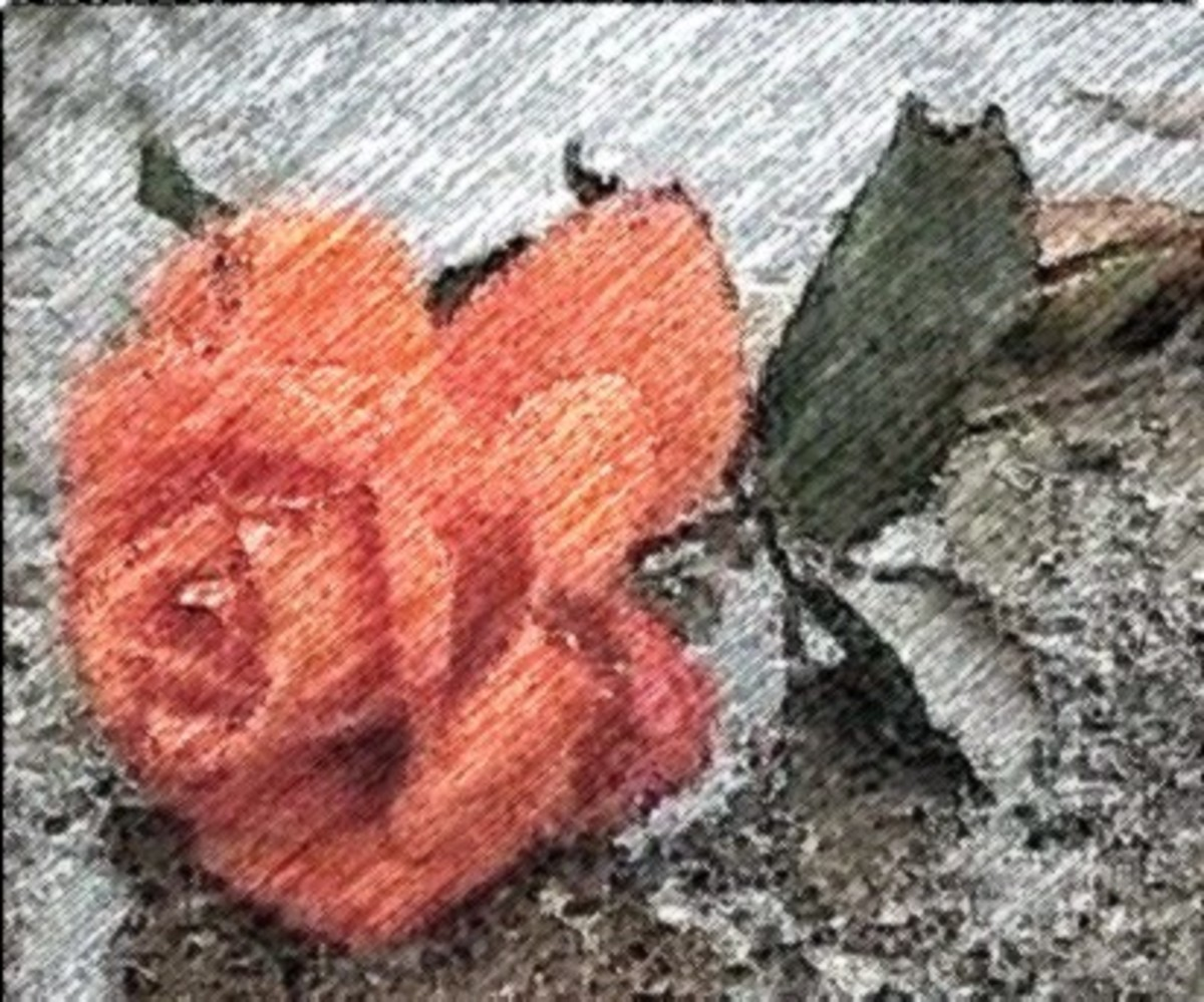 The Trampled Roses