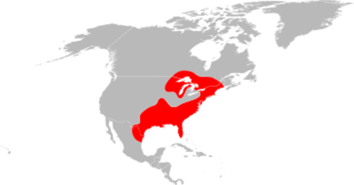 Black-legged ticks, commonly referred to as the deer tick, are generally found in the Eastern half of the United States as shown in the map above.