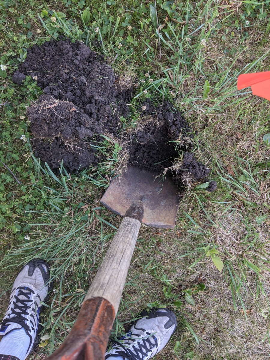 Shovel deep. Should be wider than your roots