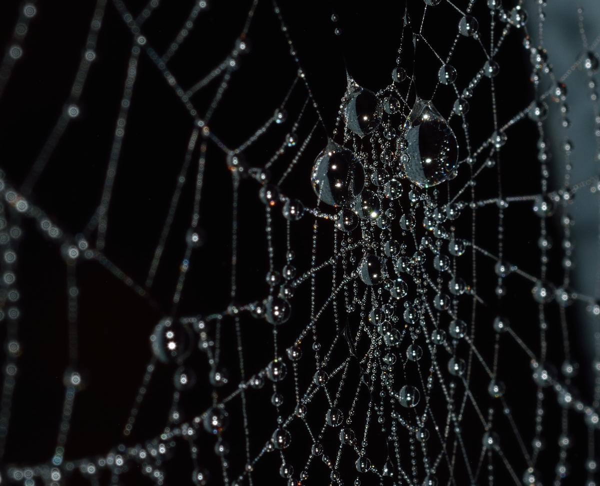 strongest spider web