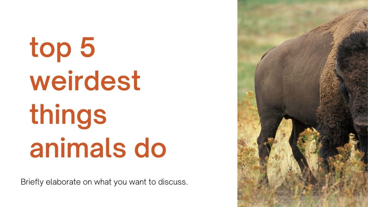 Top 5 Weirdest Things Animals Do