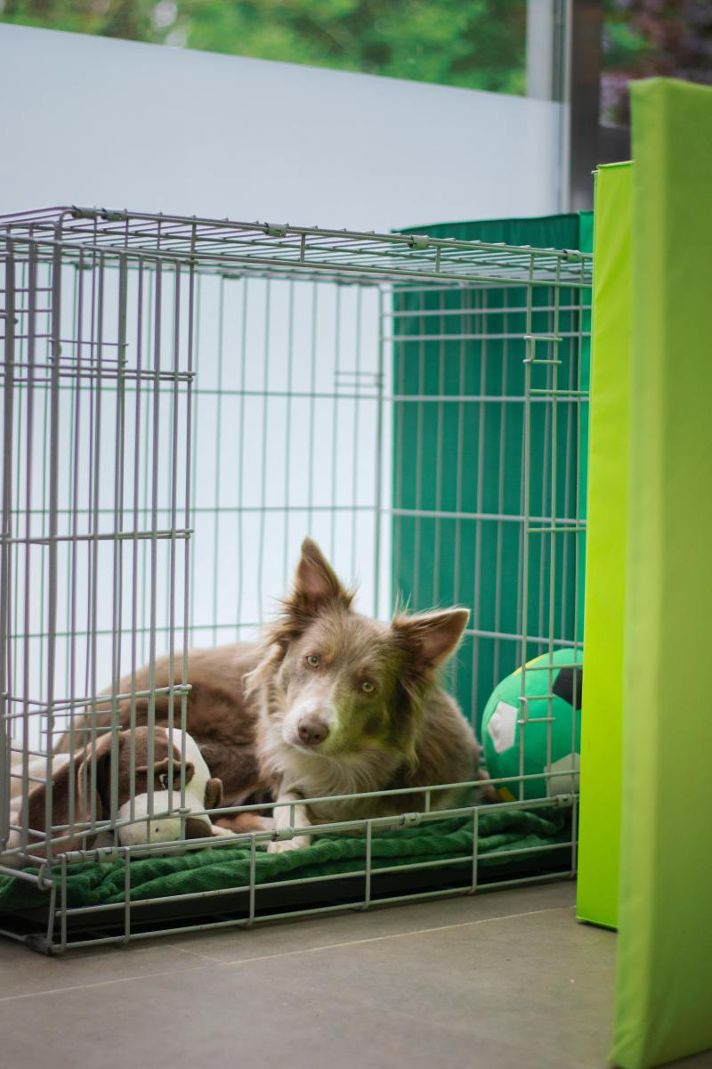 what-are-some-good-uses-for-dog-crates