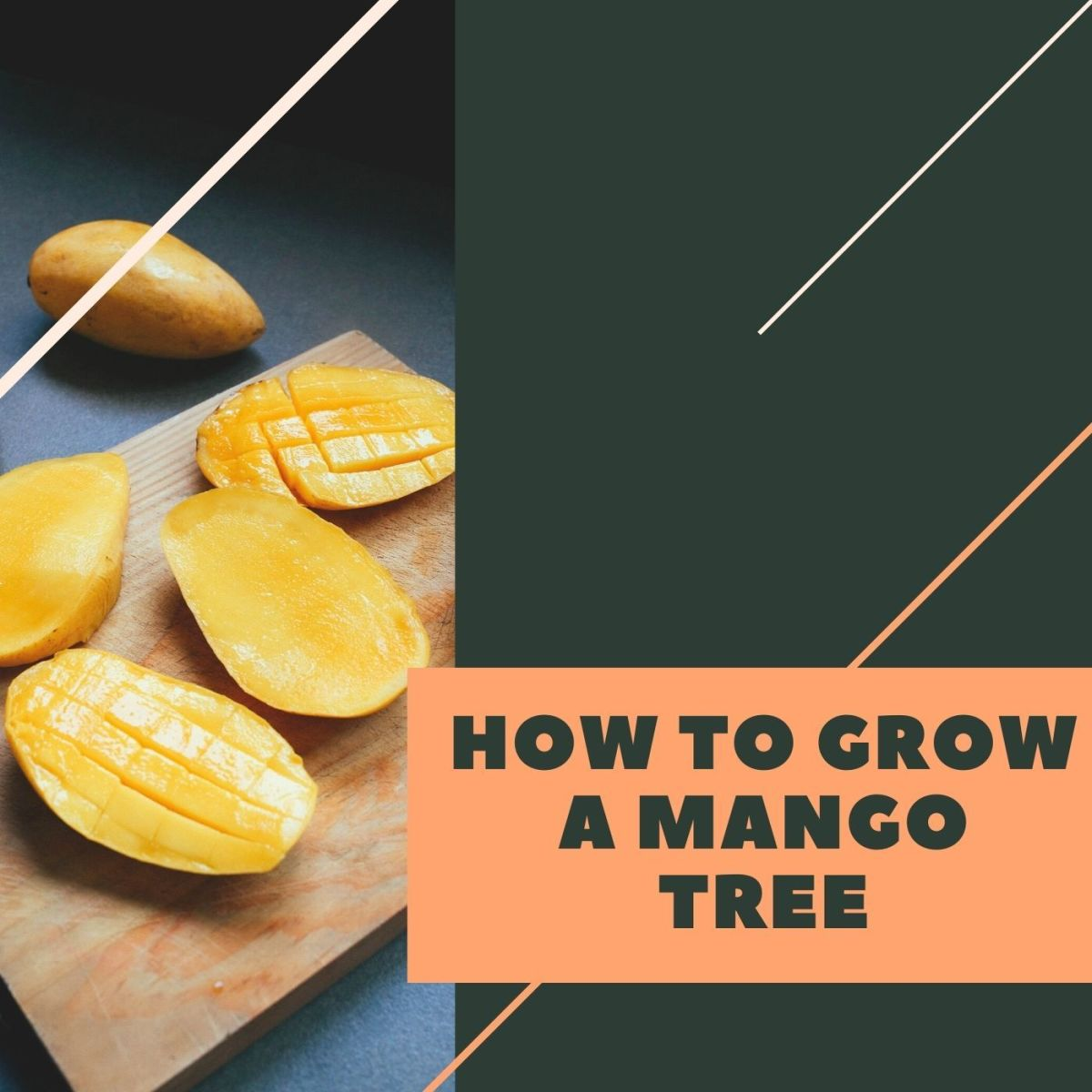 Follow these quick 6 steps to grow your own tree!