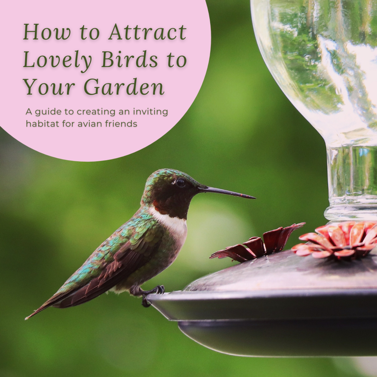 Bird Feeders and an Inviting Habitat Bring Avian Friends to the Garden