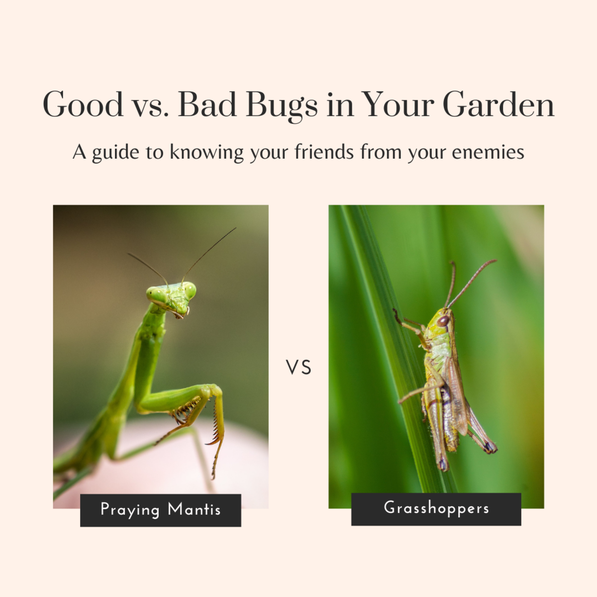 This guide will help you identify which bugs are your friends and which ones are the enemies of a healthy garden.