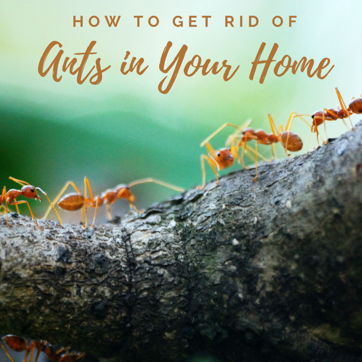 7 Natural Ways to Get Rid of Ants: How to Repel Ants Humanely Without Killing Them