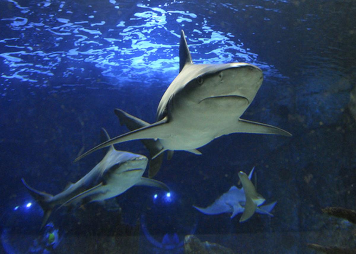 Newport aquarium, Cincinnati