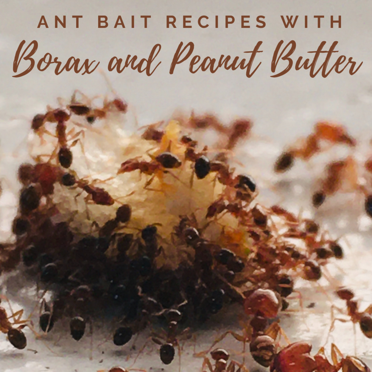 DIY Ant Bait Recipes Using Peanut Butter and Borax