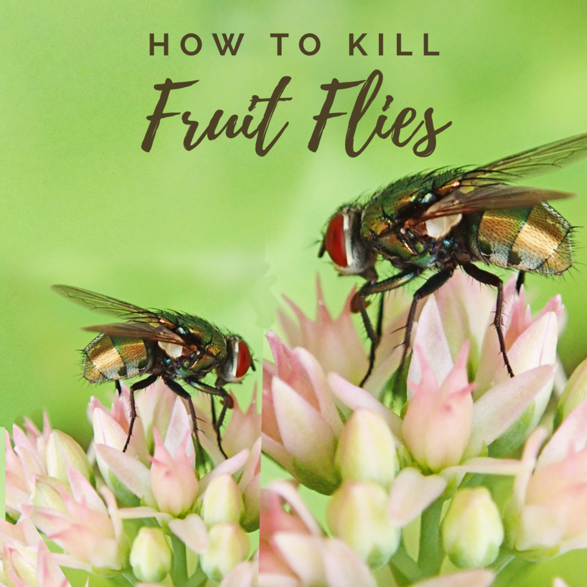 A simple and inexpensive way to get rid of fruit flies