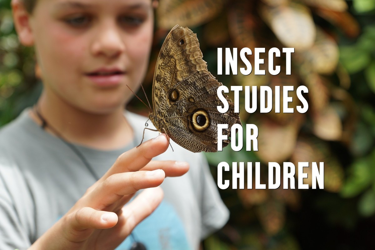 where-do-insects-live