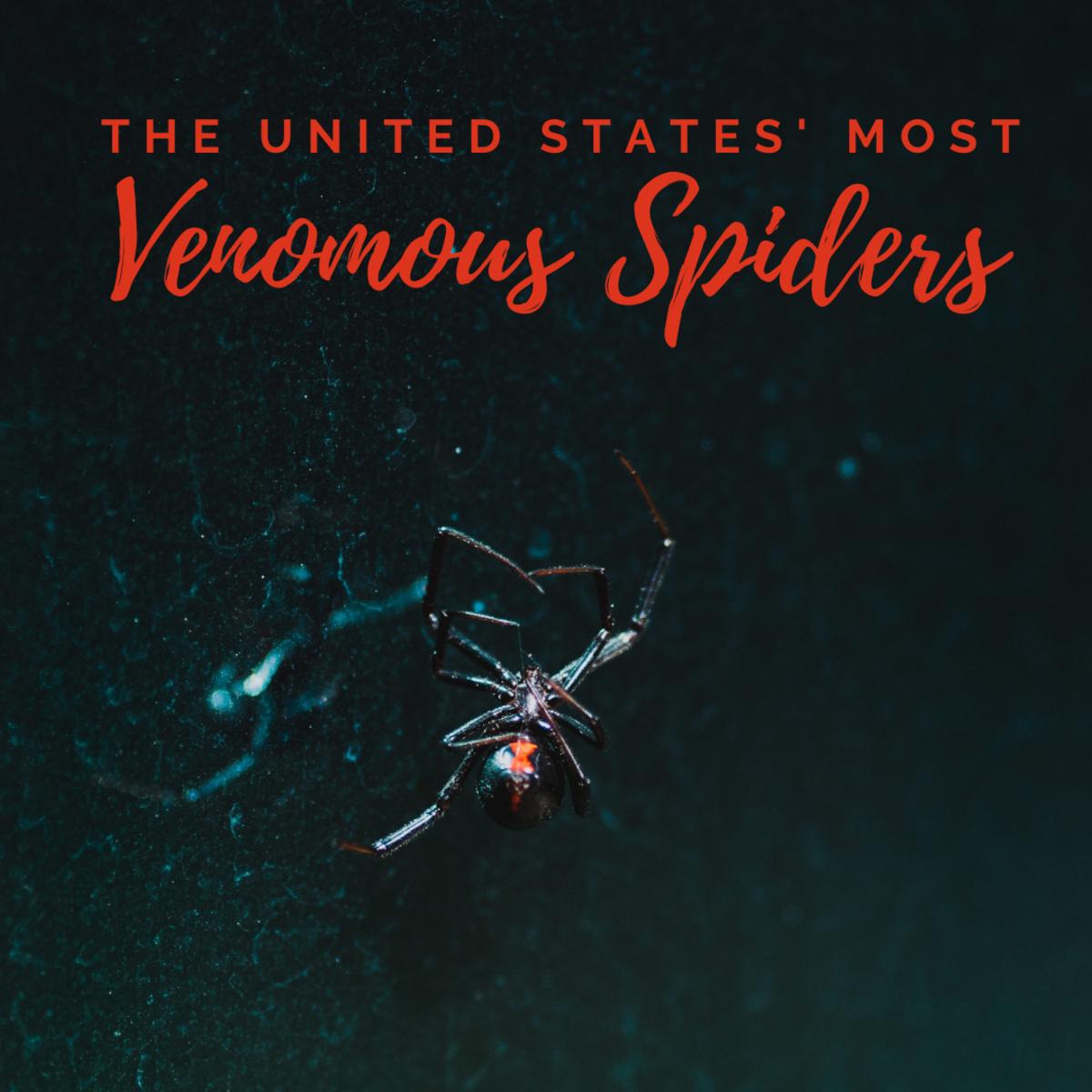 U.S. Venomous Spiders: Black Widow, Brown Recluse, & Hobo