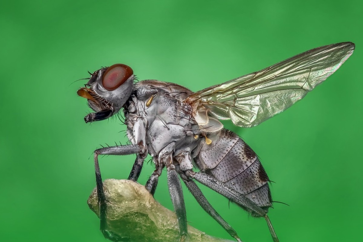 Give it up for Fight the Filthy Fly Month in June.