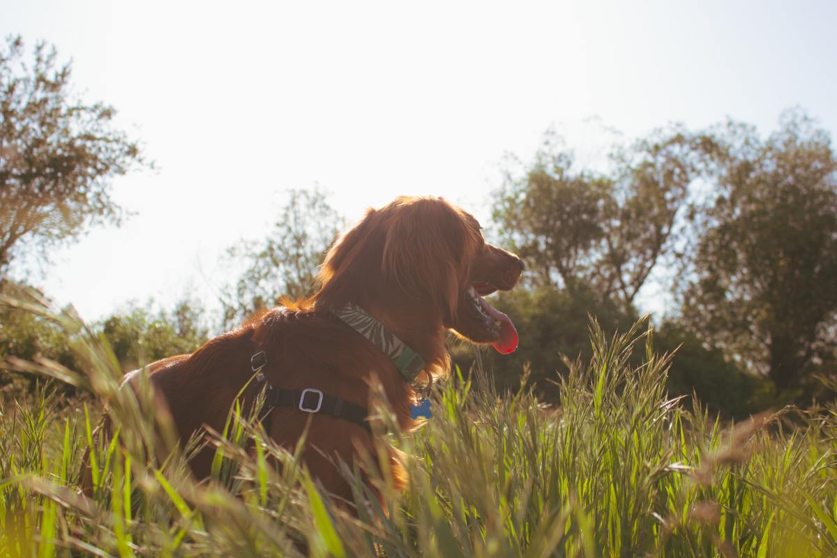 how-to-train-your-dog-to-hikewalk-off-leash