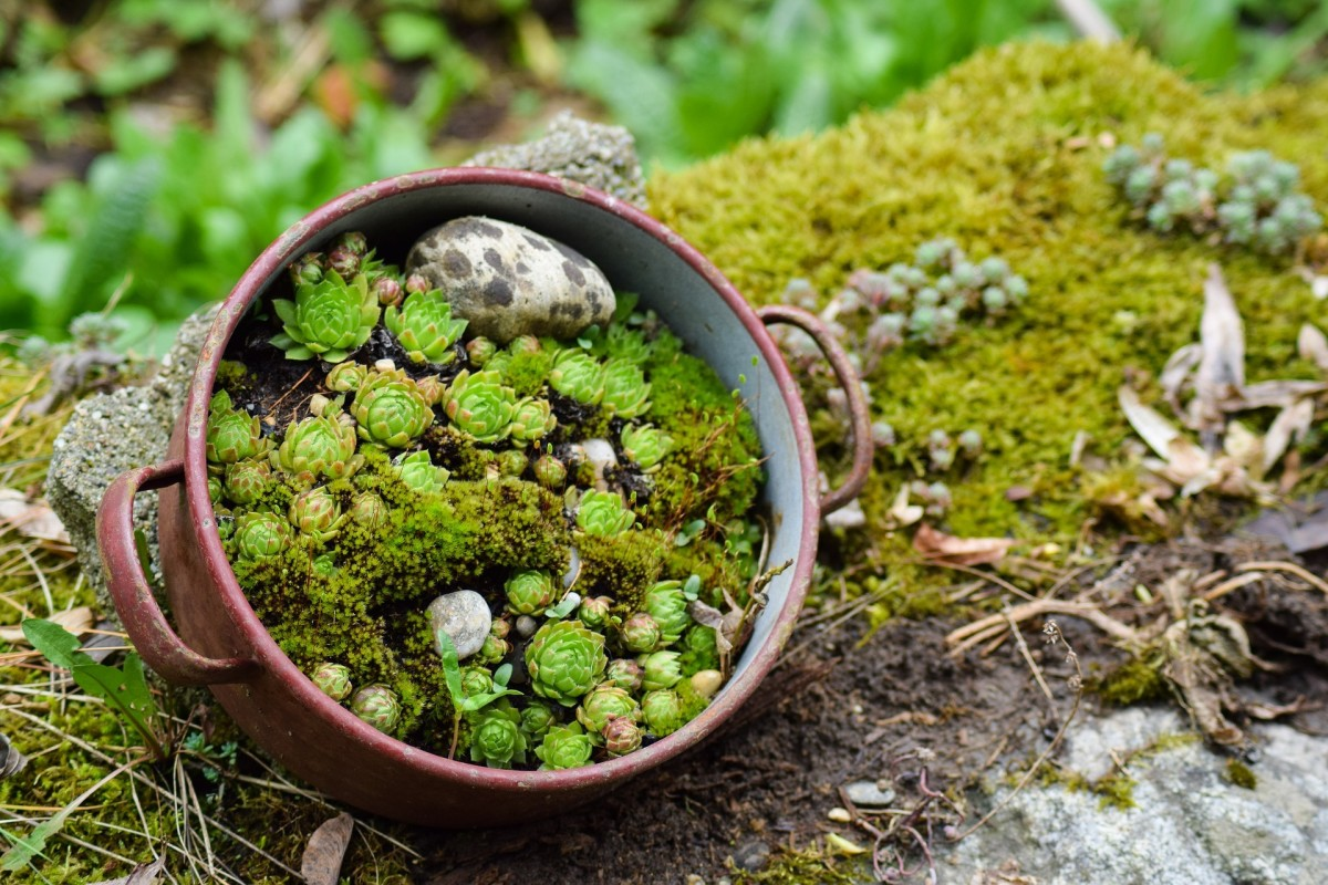 Miniature rock gardens can even be very small in size!