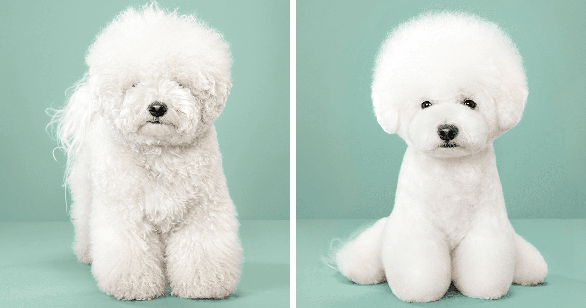 How to Avoid Excessive Shedding In Dogs Easy and Simple Hacks
