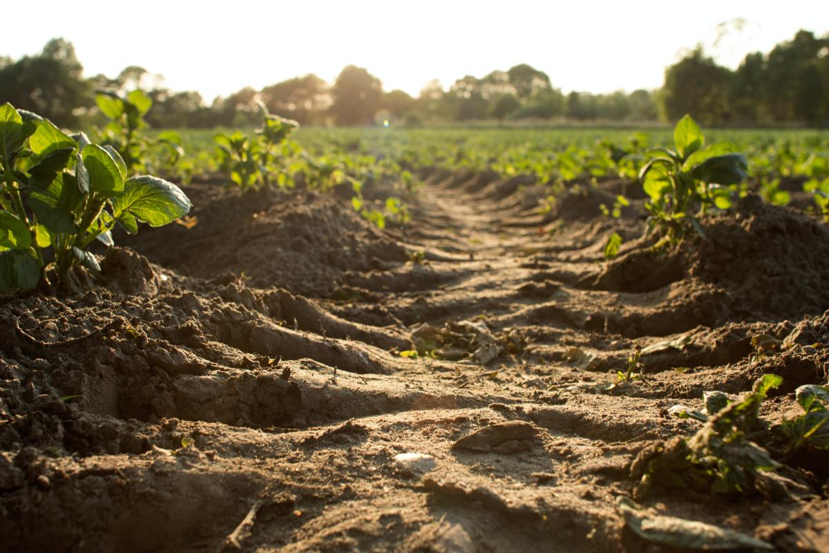 Soil isn't that hard to understand once you know whats in it.