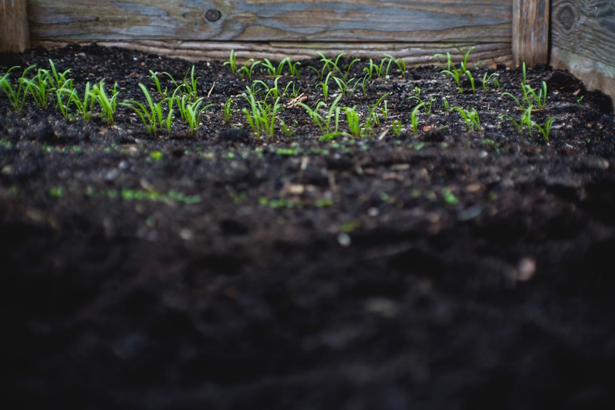 When soil is nice, it's beautiful!