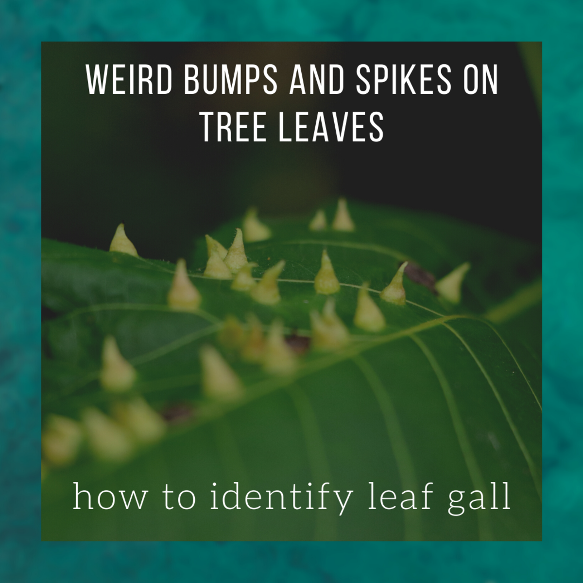Leaf Galls: Ugly Bumps and Spikes on Tree Leaves
